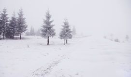 Winter landscape with trees. Mountain landscape with pinewood trees and a road, in winter Stock Photo