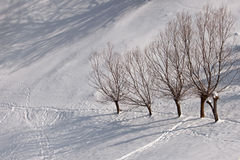 Winter landscape and trees Royalty Free Stock Image