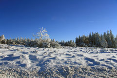 Winter landscape with trees Stock Image