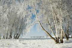 Winter landscape and trees Stock Photography