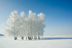 Winter landscape and trees. Cold winter day, beautiful hoarfrost and rime on trees Stock Photos