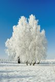 Winter landscape and trees Stock Images