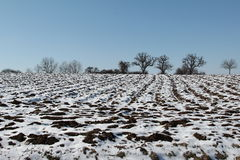 Winter Landscape. With trees and arable land Stock Images