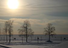 Landscape winter beach. Winter landscape with trees in the beach early sunset Royalty Free Stock Photo