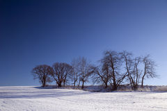 Winter landscape. With trees and blue sky Stock Images