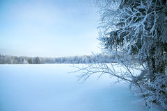 Winter landscape with trees and the blue sky Stock Photo