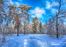 Winter landscape with trees and blue sky stock image