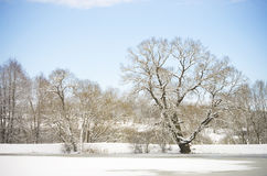 Winter landscape with trees and blue sky royalty free stock image