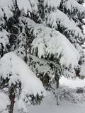 Winter landscape. Trees and Christmas trees covered with snow. royalty free stock images