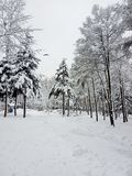 Winter landscape. Trees and Christmas trees covered with snow. stock images