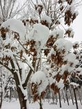 Winter landscape. Trees and Christmas trees covered with snow. royalty free stock image