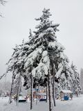 Winter landscape. Trees and Christmas trees covered with snow. royalty free stock photography
