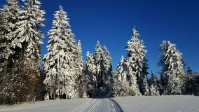 Winter landscape and trees. Cold winter day, beautiful hoardrost and rime on trees Royalty Free Stock Image