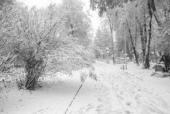 Winter landscape. Trees covered with first snow Royalty Free Stock Photo