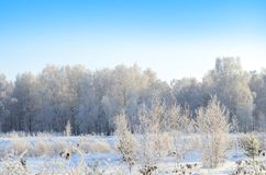 Winter landscape trees covered with frost Stock Photos