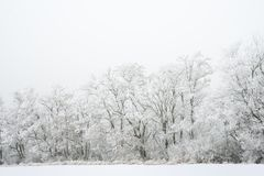Winter Landscape with Trees Covered with Frost and Snow in the Fog Stock Photo