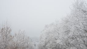 Winter Landscape with Trees Covered with Frost and Snow in the Fog Royalty Free Stock Image