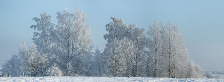 Winter landscape with trees covered with hoarfrost Stock Images