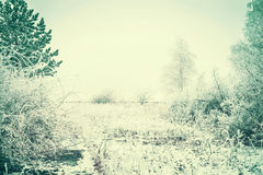 Winter landscape with trees covered with hoarfrost and snow at winter day Stock Photography