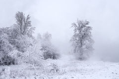 Winter landscape - trees covered with snow. Winter landscape - trees covered with fresh snow in the fog Stock Photos