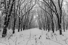 Winter landscape, trees covered in snow Royalty Free Stock Image