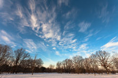 Winter landscape, trees covered in snow Royalty Free Stock Photos