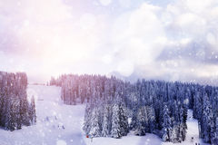 Winter landscape with trees covered by snow Royalty Free Stock Image
