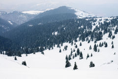 Winter landscape with trees covered by snow Stock Photography