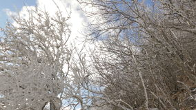 Winter landscape with trees covered by snow stock footage