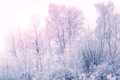 Winter landscape. Winter trees covered with snow. Sky and sunlight through the frozen tree branches. Copy space. Soft focus.  royalty free stock photos