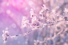 Winter landscape. Winter trees covered with snow. Sky and sunlight through the frozen tree branches. Copy space. Soft focus.  royalty free stock image