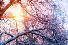 Winter landscape. Winter trees covered with snow. Sky and sunlight through the frozen tree branches. Copy space. Soft focus.  royalty free stock photo
