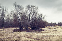 Winter landscape with trees. Filtered image Stock Photos