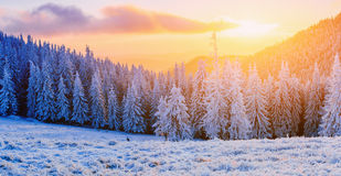 Winter landscape trees in frost Royalty Free Stock Images