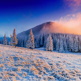 Winter landscape trees in frost Stock Photography