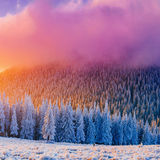 Winter landscape trees in frost. Carpathian, Ukraine, Europe. Stock Photography