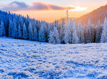 Winter landscape trees in frost Royalty Free Stock Photos
