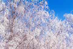Winter landscape: trees in the frost. Stock Photo
