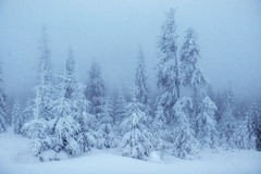 Winter landscape trees in frost and fog Royalty Free Stock Image