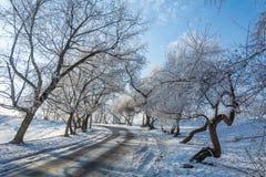Winter `s tale Stock Photos