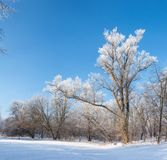 Winter `s tale Royalty Free Stock Photo