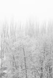 Winter landscape - trees in frost Stock Images