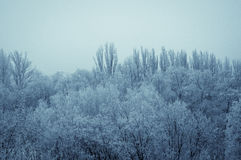Winter landscape - trees in frost Stock Image