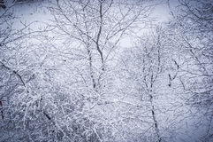 Winter landscape - trees in frost Royalty Free Stock Photography