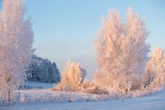 Winter landscape with trees in frost. Sunny winter morning. royalty free stock photography