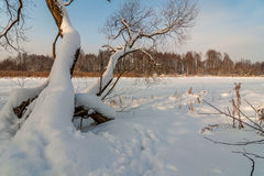 Winter landscape. trees and the frozen lake under snow Royalty Free Stock Images