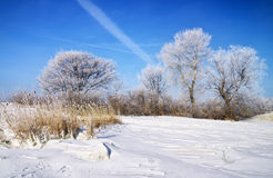 Winter landscape with trees Stock Photography
