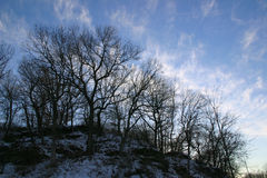 Winter landscape, trees on hill. Silhouette of bare winter trees on a hill against a blue sky with cirrus clouds Stock Photos