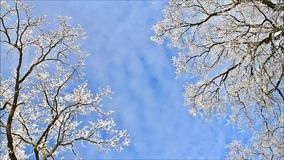Winter landscape, trees in hoarfrost. Landscape in winter, trees in hoarfrost stock video footage