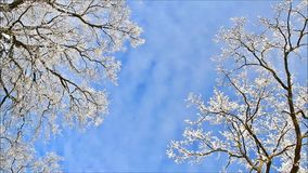 Winter landscape, trees in hoarfrost stock video footage